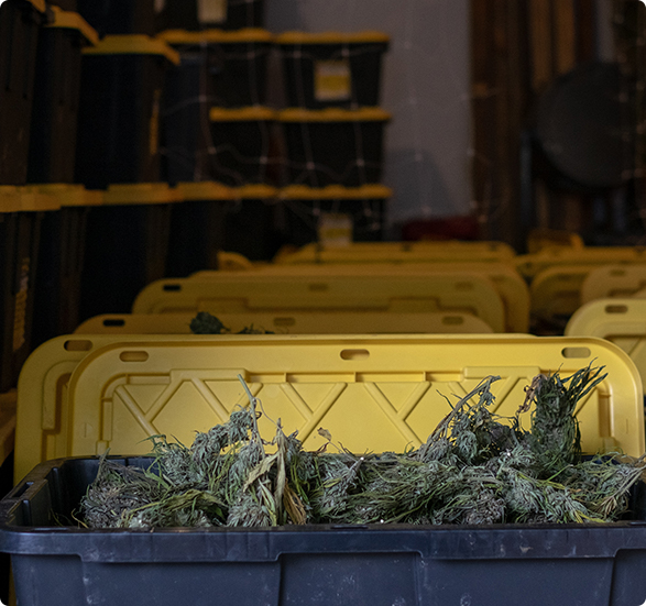 Expert Payroll and Tax Preparation for Marijuana Dispensaries
