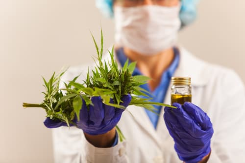How-are-cannabis-employees-paid